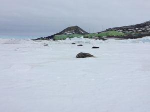 So many seals!